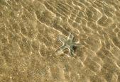 Starfish on the shoal — Stock Photo