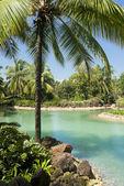 Pozadí tropických zobrazení. goa — Stock fotografie