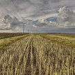 Stubble Field and Prarie Storm — Stock Photo