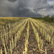 Stubble Field and Prarie Storm — Stock Photo #6927762