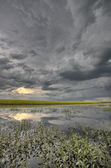 Slough pond and crop — Stock Photo