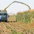 Corn Harvest — Stock Photo