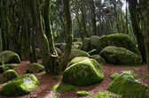 Rocks and moss in Sintra forest — Foto Stock