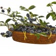 Blueberries in a basket — Stockfoto