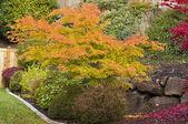 秋天花园 — 图库照片