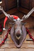 Alces de navidad — Foto de Stock