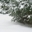 Stock Photo: Snowy christmas tree