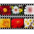 Filmstrip with flower images — Stock Photo