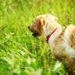 Dog play in grass — Stock Photo