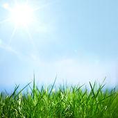 Erba verde — Foto Stock