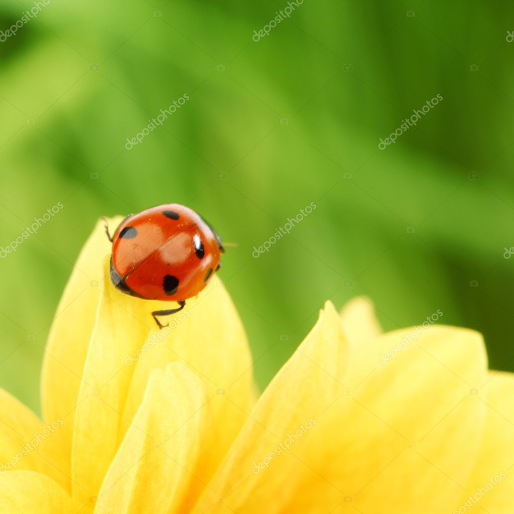 Ladybug on yellow flower grass on background — Stock Photo #6850241