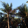 Palm in blue sky — Stock Photo