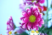 Colourful summer flowers — Stock Photo