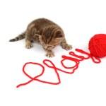 Play cat — Stock Photo
