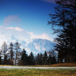 Spring alps — Stock Photo #6906201