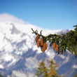 Spring alps — Stock Photo #6906203