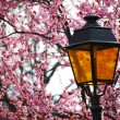 Stock Photo: Lantern in lilac