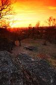 Lever du soleil de printemps forêt — Photo
