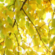 Autumn leaves close up — Stock Photo #6931990