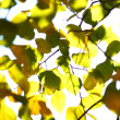 Autumn leaves close up — Stock Photo