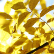 Autumn leaves close up — Stock Photo #6932012