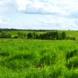 Green grass field — Stock Photo #6934113
