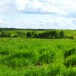 Green grass field — Stock Photo #6934113