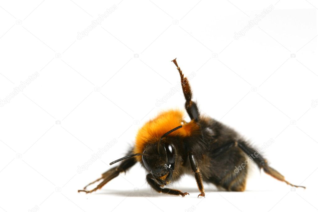 Dance aerobic bumble bee isolated on white background — Stock Photo #6933157