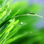 Grass nature background — Stock Photo