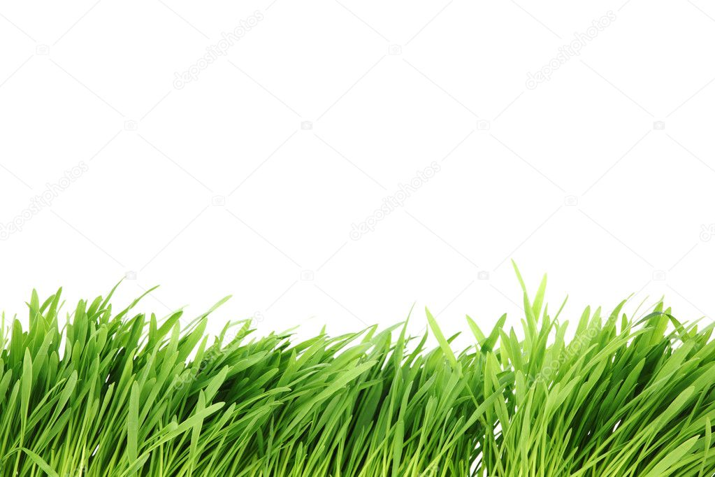 Grass isolated on white background — Stock Photo #7115491