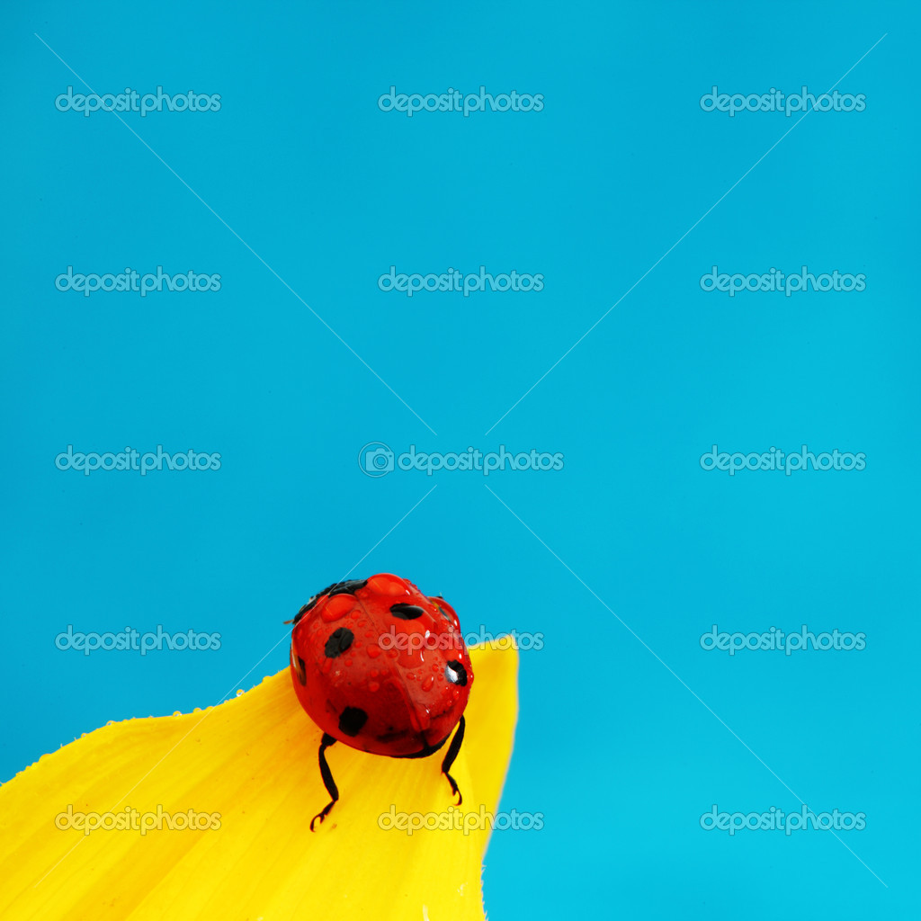 Ladybug on sunflower blue background — Stock Photo #7116231