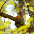 Squirrel in autumn forest - Stock Photo
