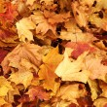 Autumn leaves — Stock Photo #7193396