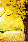 Autumn park — Fotografia Stock