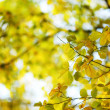 Stock Photo: Autumn leaves close up