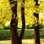 Autumn trees — Stock Photo #7293888