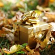 Autumn gift - Stock Photo
