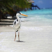 Stork on the ocean — Stock Photo