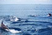 Dolphins in ocean waves — Stock Photo