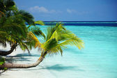 Tropical island — Foto de Stock