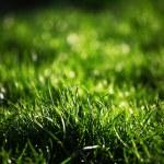 pasto verde con — Foto de Stock   #7357441