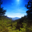 Mountain forest - Stock Photo