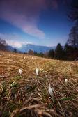 山の花 — ストック写真
