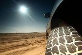 Camion du désert — Photo