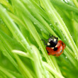 Ladybug on grass - Stock Photo