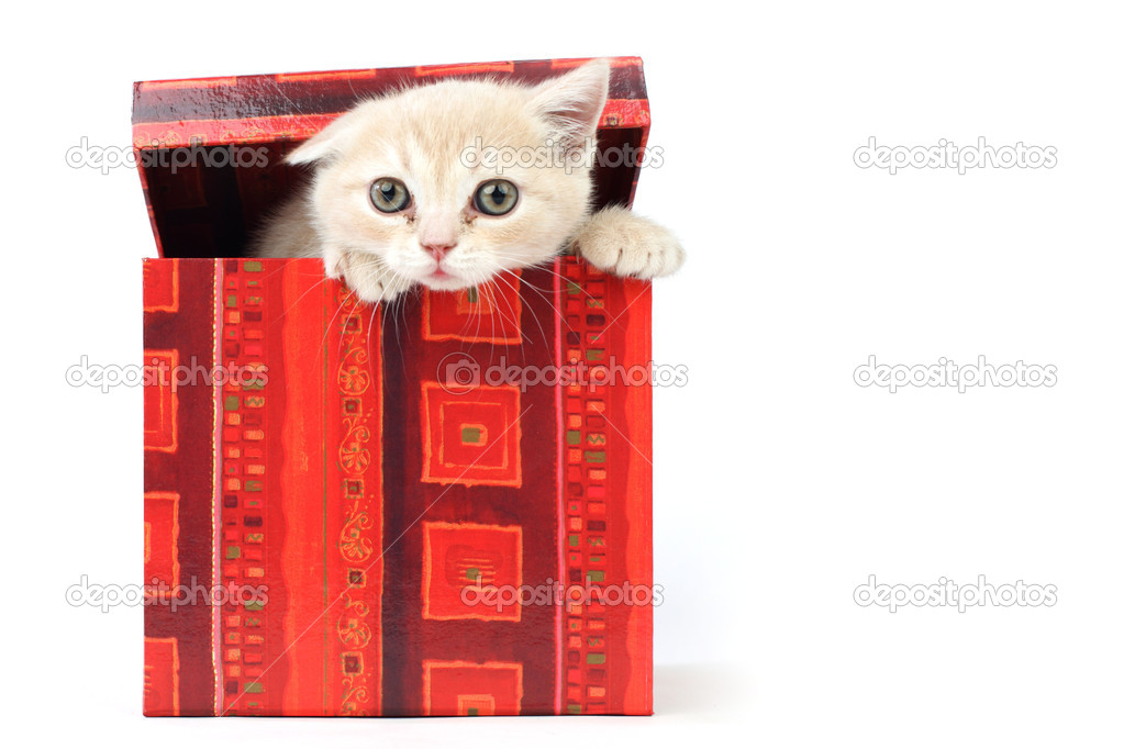 Cat in gift box isolated on white background — Stock Photo #7473581