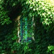 Foliage window — Stock Photo #7515599