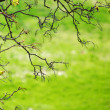 Branches - Stock Photo