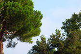 Trees in sky — Stock Photo
