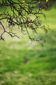 Branches — Photo